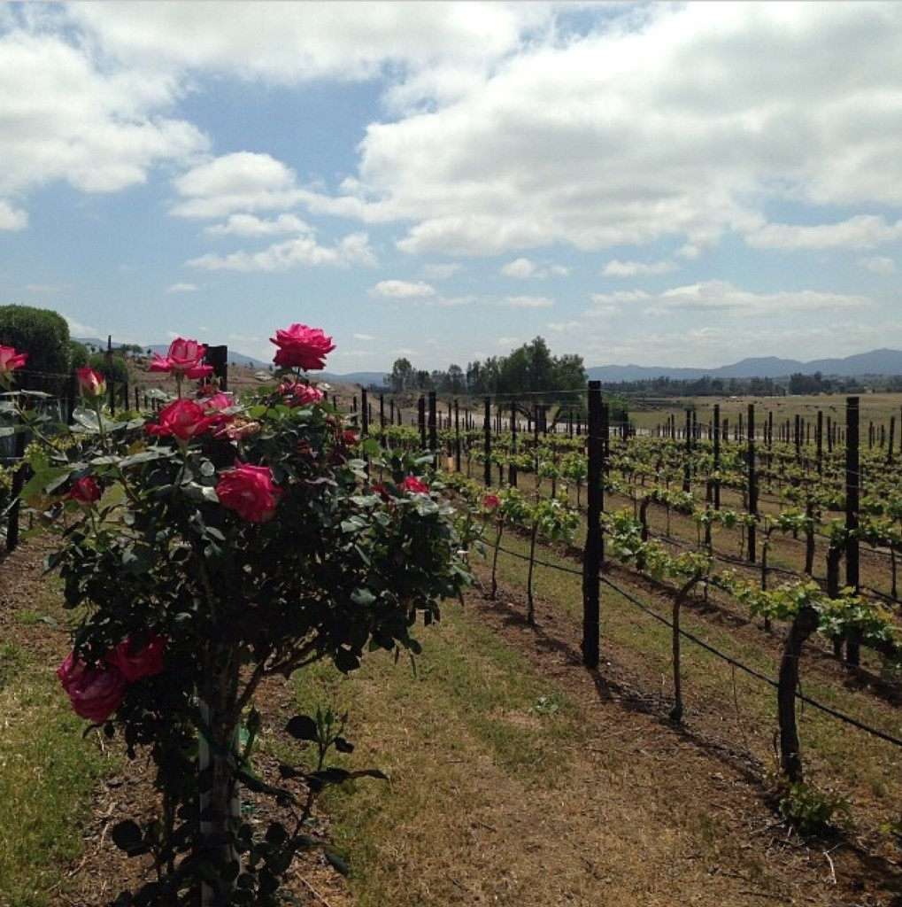 temecula vineyards.