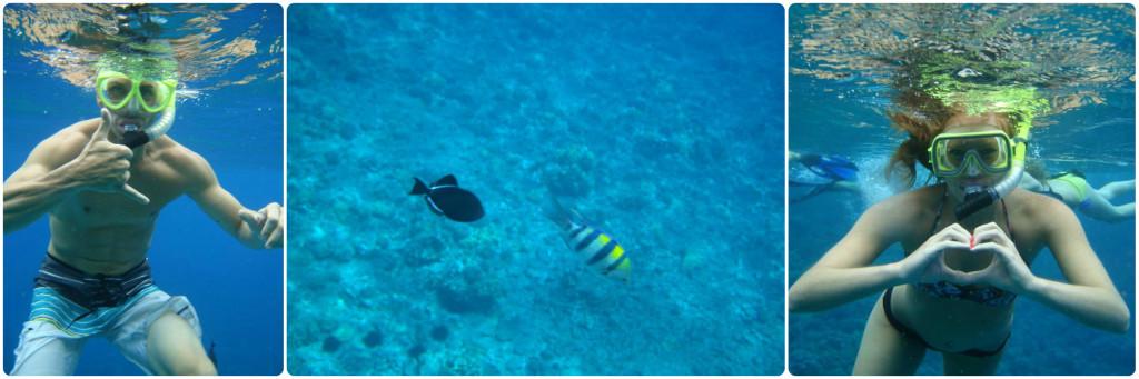 snorkel mix